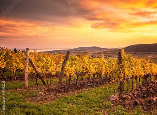 Foto op Plexiglas Zuid Afrika Colorful sunset over vineyards at lake Balaton, Hungary