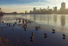 Birds On Frozen Lake In Stanle...