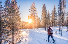 Cross-country Skiing In Scandi...