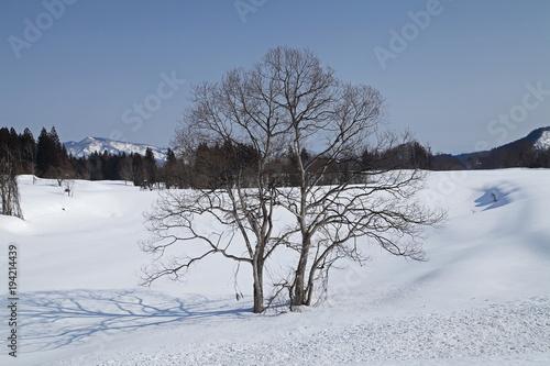 Fotografie, Obraz  雪原の木