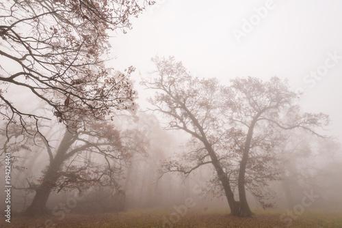 piekna-sceneria-w-lesie-z-mgla-i-mgla-i