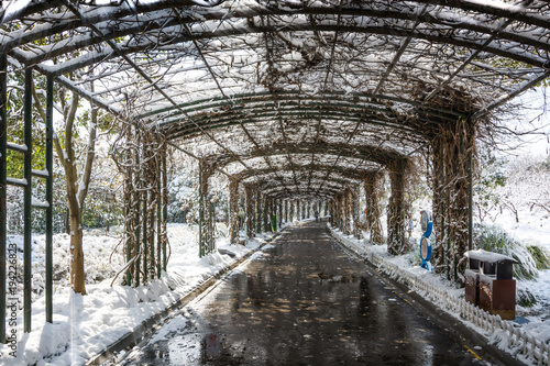 Fotografie, Obraz  Snowfall