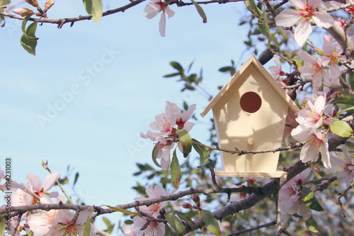 Little birdhouse in spring over blossom cherry tree.