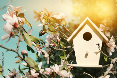 Photo Little birdhouse in spring over blossom cherry tree.