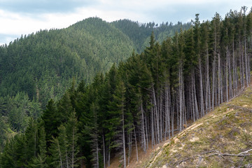 Forestry section in Port Underwood, South Island, New Zealand