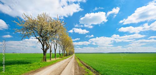 Fotografie, Obraz  Kulturlandschaft im Frühling, Feldweg, Baumreihe, endlose grüne Felder