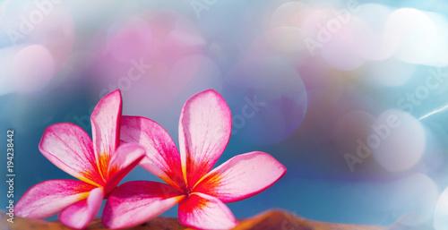 Poster de jardin Frangipanni Tropical flowers