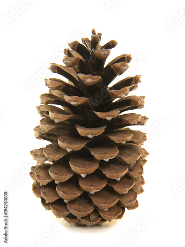 Large single pinecone on a white background