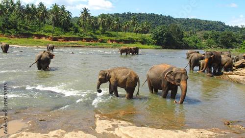 Aluminium Prints Elephant Elephant's Pool