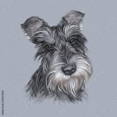 Illustration Of The Scottish Terrier On A Gray Background Dog Is Man S Best Friend Animal Collection Dogs Black And White Portrait Art Background For Banner T Shirt Cover Design Template Buy This