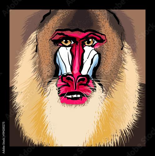 Tuinposter Art Studio Portrait of a mandrill primate