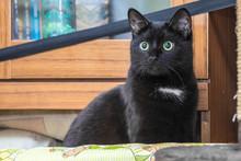 Green-eyed Black Cat Sitting A...