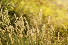 Natural Abstract Soft Green Su...