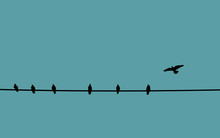 Birds On Wire Color Background