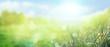 Leinwandbild Motiv Gras im Frühling