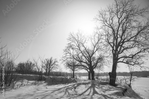Foto op Aluminium Grijs Winter landscape with bare trees and the sun