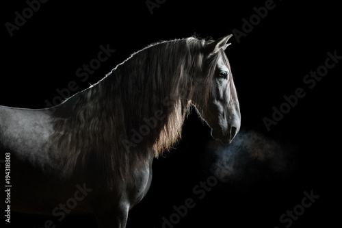 Valokuva  Silhouette of a gray Andalusian horse with long mane and steam from nostrils iso