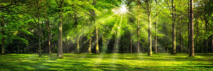 FototapetaGrünes Wald Panorama im Sonnenlicht