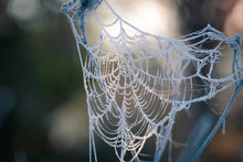 Hoarfrost On The Cobweb. Autumn Morning Frost.