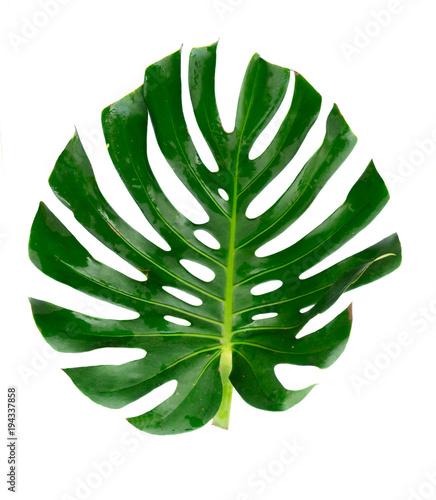 Fotobehang Draw fresh green leaf