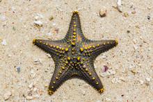 Yellow Knobbed Starfish