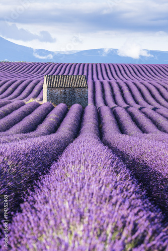 Tuinposter Mediterraans Europa Lavender fields, Provence, France