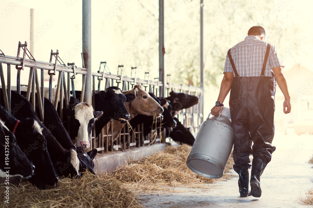 Fototapety, obrazy: farmer asian are holding a container of milk on his farm.walking out of the farm