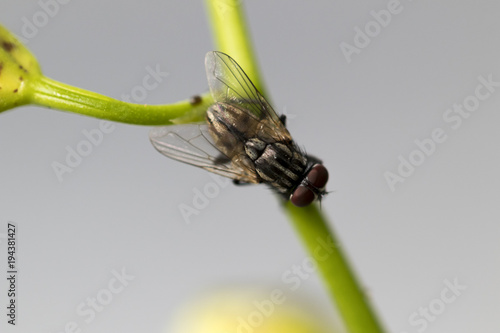Foto op Plexiglas Textures Little fly on green branch. Super macro on amazing eyes. Macro lens, close-up photography.