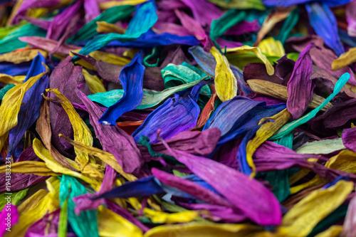 Deurstickers Paradijsvogel Flower Petal Multicolor Background Texture