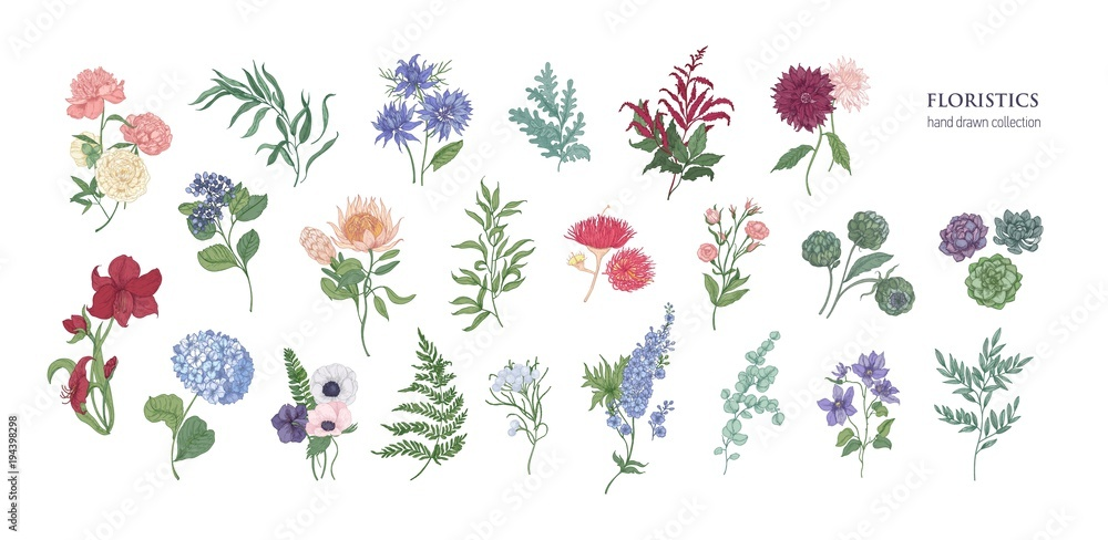 Fototapety, obrazy: Collection of popular floristic flowers and decorative plants isolated on white background. Set of beautiful floral decorations. Botanical colorful hand drawn vector illustration in vintage style.