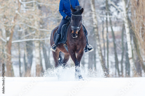 Cuadros en Lienzo Bay horse with female rider galloping on winter field