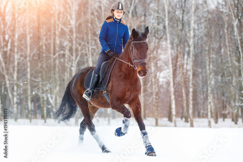 Poster Equitation Young rider girl on bay horse walking on snowy field in winter. Winter equestrian activity background