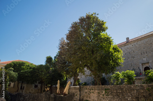 Tuinposter Oost Europa Traditional Buildings and Large Tree in the Old Town of Budva, Budva Riviera, Montenegro