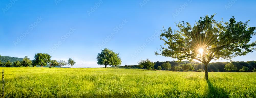 Grüne Landschaft mit Wiese, Bäumen und Feldern