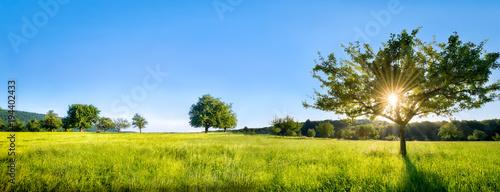 Fototapeta Grüne Landschaft mit Wiese, Bäumen und Feldern obraz