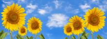 Banner Summertime Blue Sky Clo...