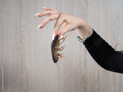 Fingers of a female hand with disgust holding a big nasty cockroach