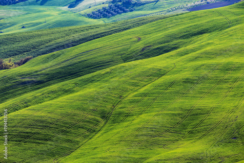 Deurstickers Groene Typical Tuscan landscape - green waves