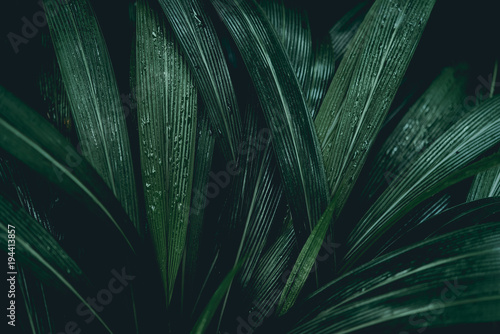 Macro photographie Plant background