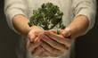canvas print picture - Hände halten Baum