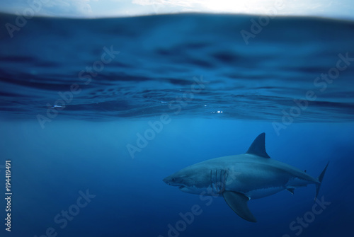 shark in the sea Wallpaper Mural