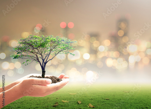 Foto  World environment day concept: Human hand holding big tree over beautiful nature