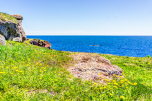 Trail Hiking In Bonaventure Island By Perce, Quebec In Gaspe, Gaspesie Region With Edge Of Cliff And Flowers