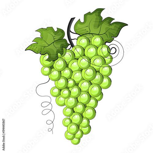 Ripe grape isolated on white. Fototapete