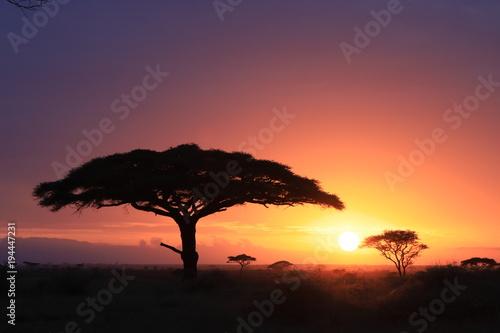 Deurstickers Australië Tanzania