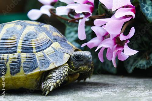 tartaruga vicino ai fiori Canvas Print