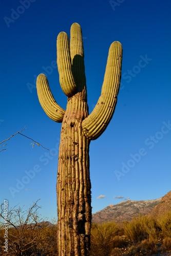 Papiers peints Cactus Catalina State Park Oro Valley Arizona Cactus Tucson