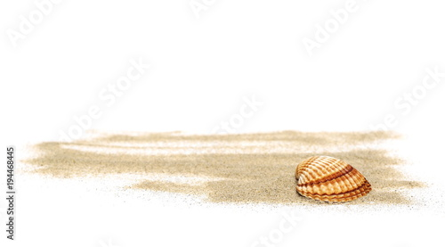 Sea shells in sand pile isolated on white background Canvas Print