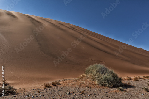 Foto op Aluminium Diepbruine landscape with shrubs and red dunes in the Namibia desert. Sossusvlei.