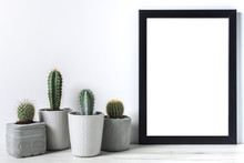Many Cactuses In Concrete Pots On White Background And Black Empty Picture Frame